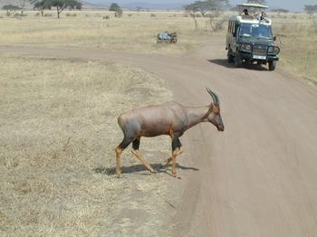 safari.2.jpg