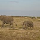 safari.3.jpg