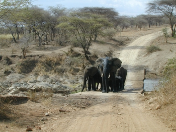 safari.4.jpg