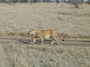 safari.5.jpg