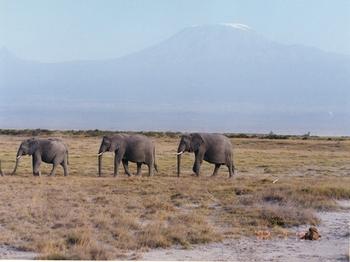 safari100.jpg
