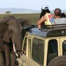 safari20.jpg