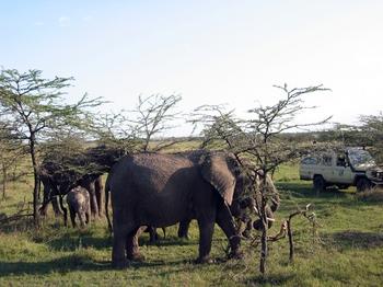 safari205.jpg