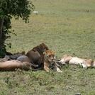 safari2061.jpg