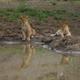 safari207.jpg
