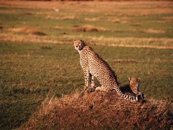 safari21.jpg