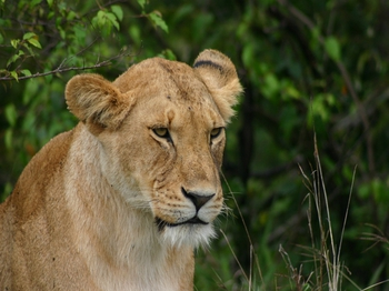 safari211.jpg
