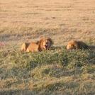 safari216.jpg