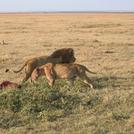 safari217.jpg