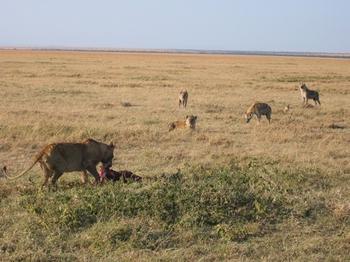 safari218.jpg