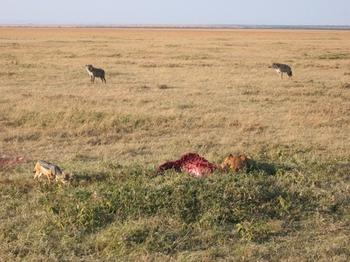 safari219.jpg