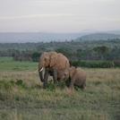 safari221.jpg