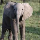 safari222.jpg
