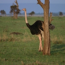 safari223.jpg