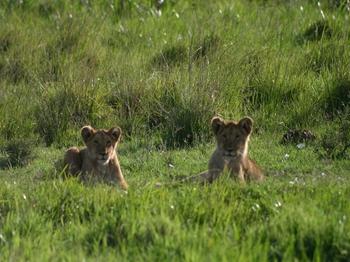 Kenya419.jpg