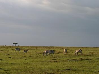 Kenya425.jpg
