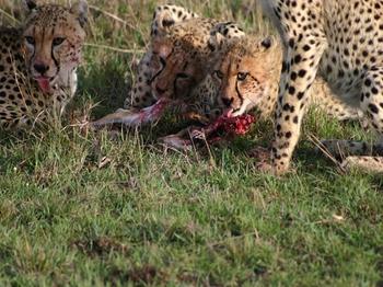 Kenya440.jpg