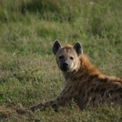 Kenya442.jpg