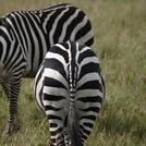 Kenya206_R.jpg