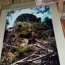 Tikal581.jpg