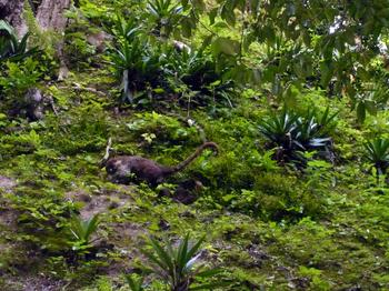 Tikal702.jpg