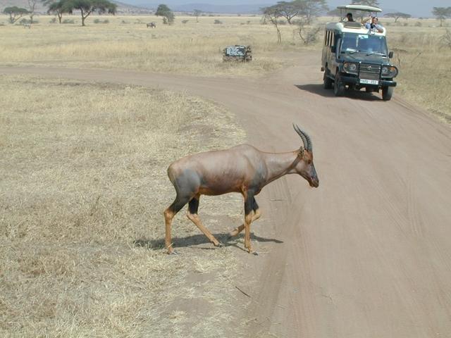 http://www.itonaika.com/column/images/safari.2.jpg