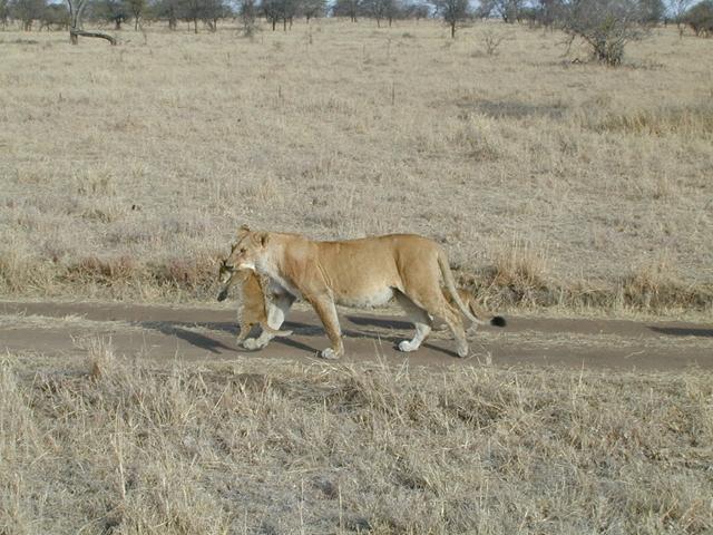 http://www.itonaika.com/column/images/safari.5.jpg