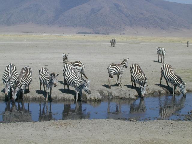 http://www.itonaika.com/column/images/safari1.jpg
