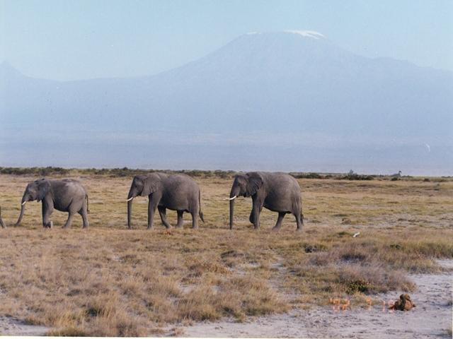 http://www.itonaika.com/column/images/safari100.jpg
