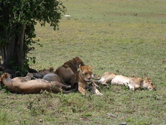http://www.itonaika.com/column/images/safari2061.jpg