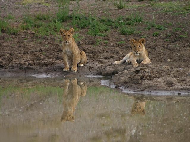 http://www.itonaika.com/column/images/safari207.jpg