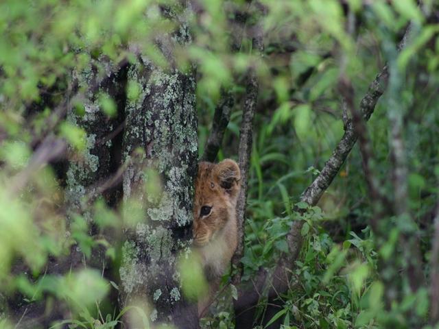 http://www.itonaika.com/column/images/safari208.jpg