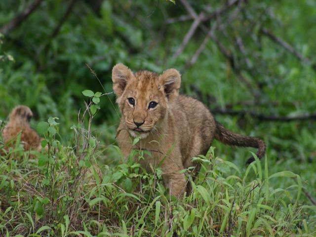 http://www.itonaika.com/column/images/safari209.jpg