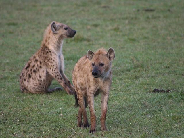 http://www.itonaika.com/column/images/safari212.jpg