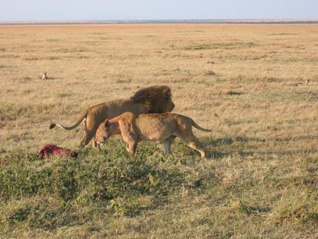 http://www.itonaika.com/column/images/safari217.jpg