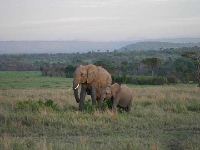 http://www.itonaika.com/column/images/safari221.jpg