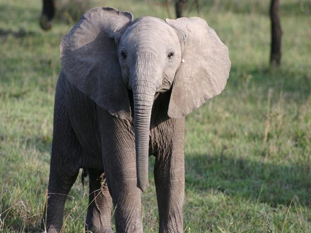 http://www.itonaika.com/column/images/safari222.jpg