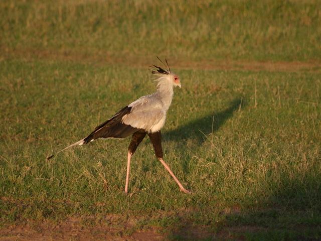 http://www.itonaika.com/column/images/safari224.jpg