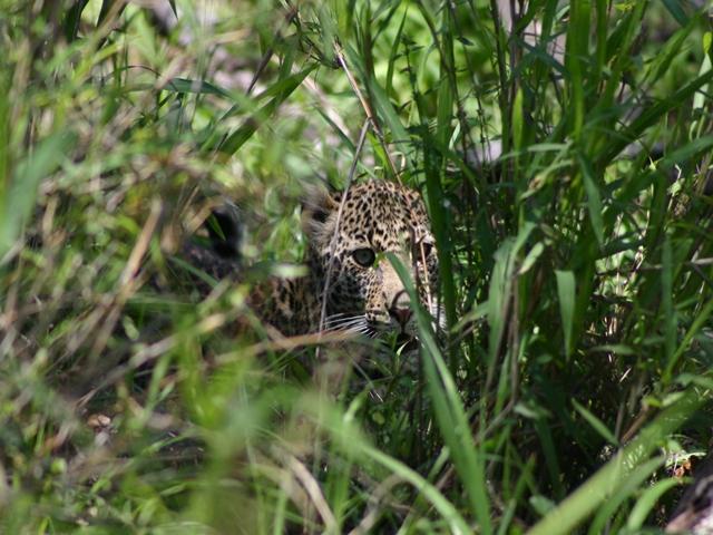 http://www.itonaika.com/column/images/safari230.jpg