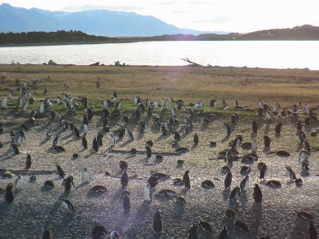 http://www.itonaika.com/column/images/ushaia127.jpg